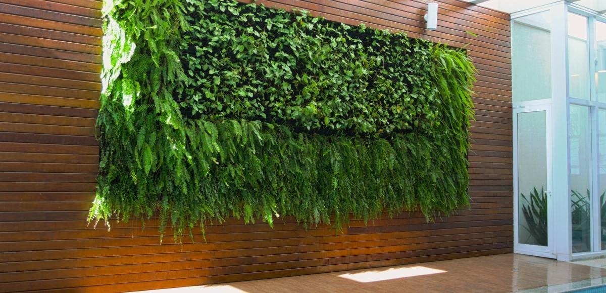 plantas jardim vertical sol plenoJardim vertical é uma opção para